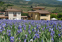 Le Case di Greve - villas in Greve in Chianti to rent